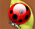 Spider Bugs